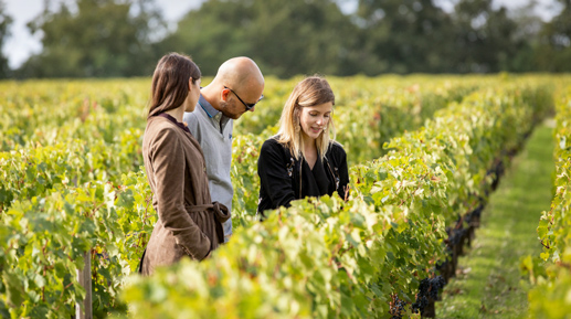 visite-expert-chateau-medoc